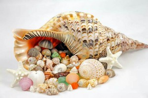 Seashell Treasure Chest